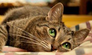 Лучший кот на свете
