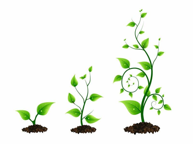 Растения в векторе